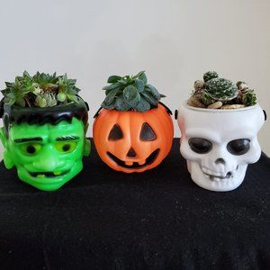 Other - Halloween Succulents, Set of 3 live plants in pots